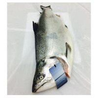 Fresh Gilled and Gutted ORA King Salmon 3-4kg (KG) - Click for more info